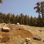 Ağaç katliamında sınır yok – Adiller köyünde ağaç bırakmayacaklar