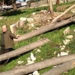 Büyükçekmece Belediyesi, zararlı bahanesiyle birçok ağacı kesti