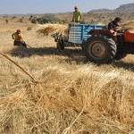 Elektrik borcu olan çiftçiye tarımsal destek verilmeyecek