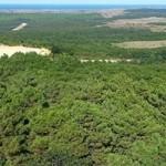 Ormanlar bir kez daha talana açılıyor