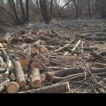 Devlet 200000 ağacı kesen şirkete 2,8 milyon TL para verdi
