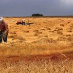 Tarımsal istihdam düşüyor, Üretici tarlasını terk ediyor
