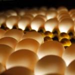 Yumurtaya 1 ayda yüzde 100 zam geldi