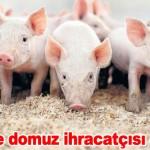 Türkiye domuz ihracatçısı olacak