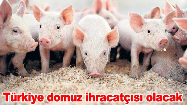domuz-turkiye