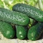 Antalya'da sebze ve meyve üreticileri kara günler yaşıyor