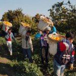Türkiye'de çocukların yüzde 55'i çalıştırılıyor